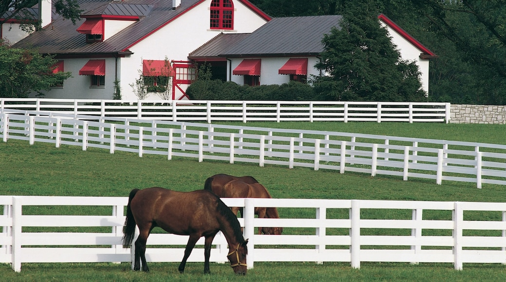 Lexington featuring land animals and horse riding