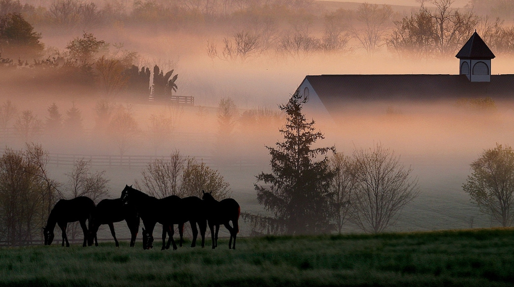 Lexington which includes land animals, mist or fog and landscape views