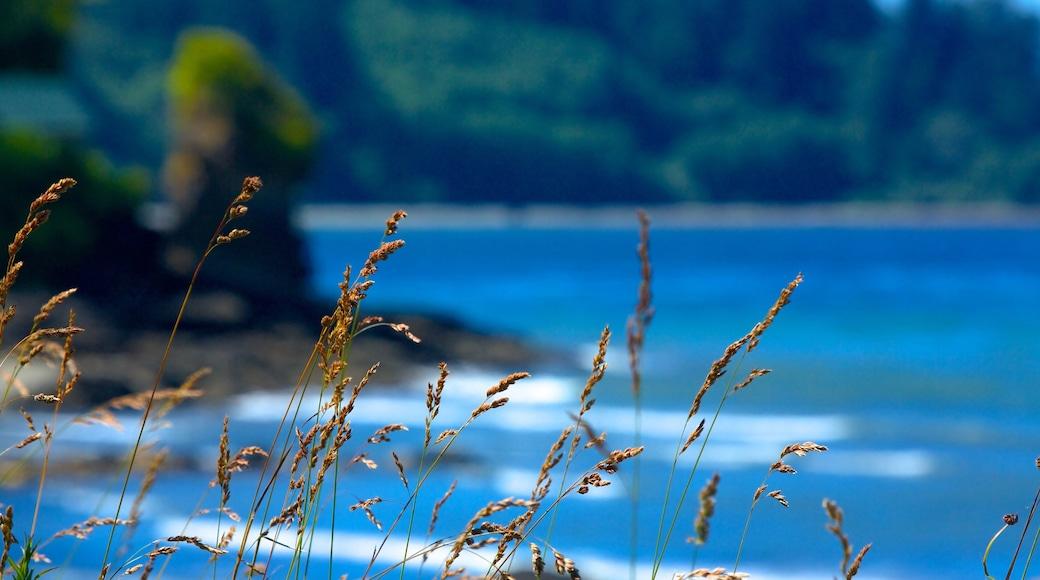 Olympicin kansallispuisto joka esittää yleiset rantanäkymät