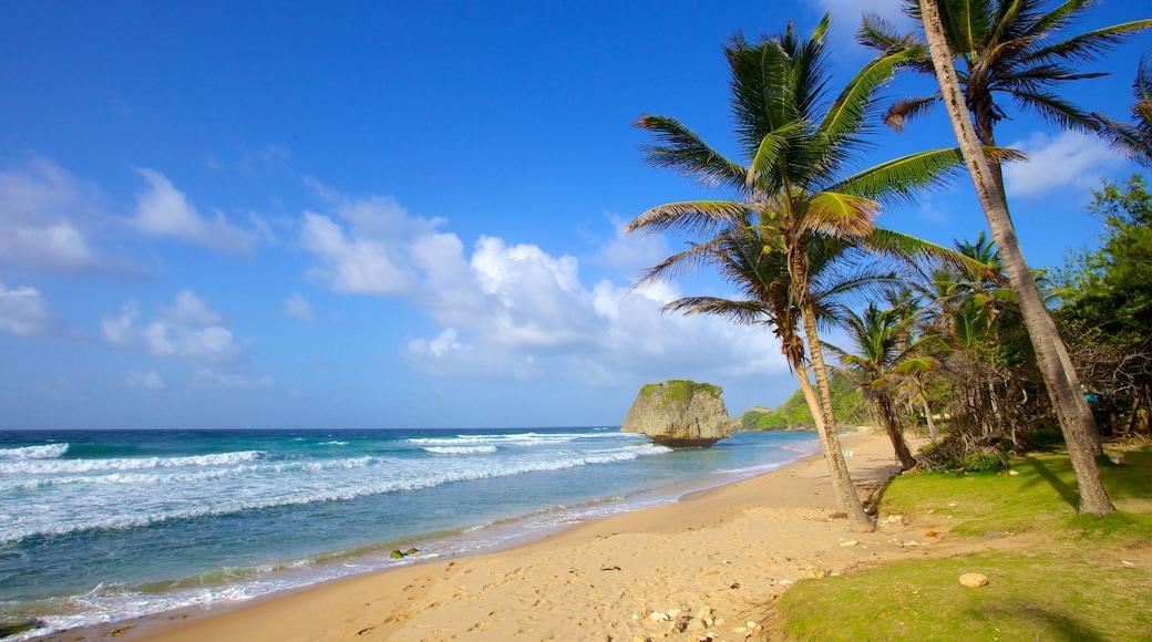 Bathsheba featuring landscape views, tropical scenes and a beach