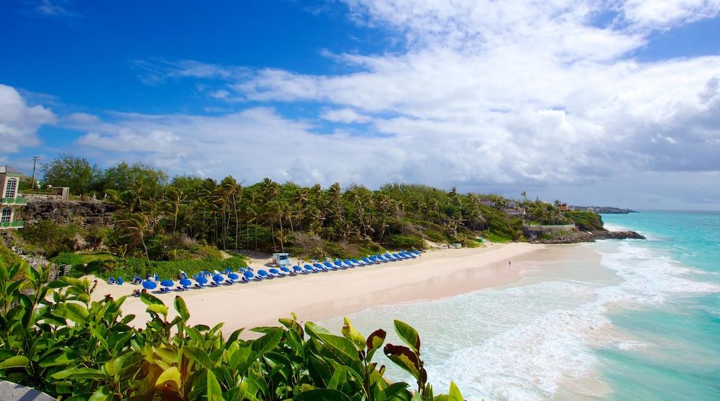 Crane Beach which includes landscape views, a sandy beach and tropical scenes