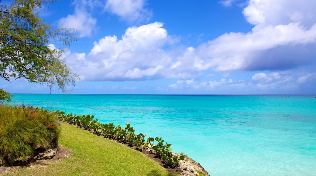 Miami Beach showing general coastal views, landscape views and tropical scenes