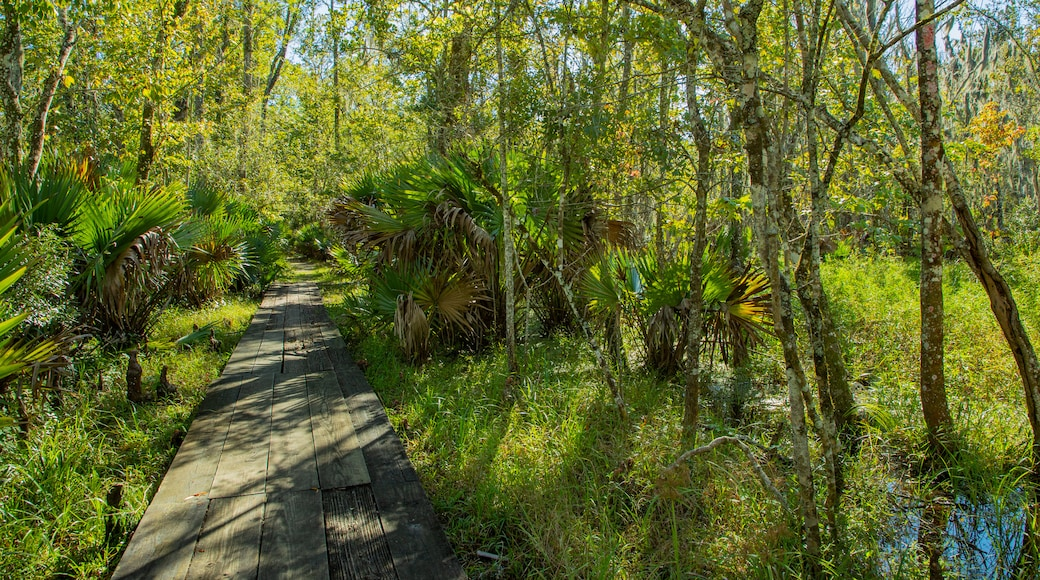 Jean Lafitte National Historical Park and Preserve Visitor Center