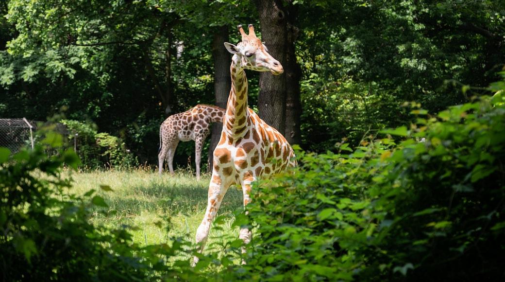 브롱크스 동물원