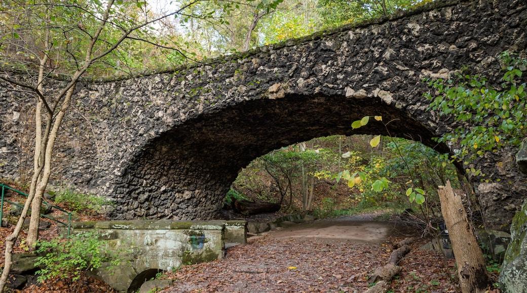 Schenley Park showing a garden and a bridge