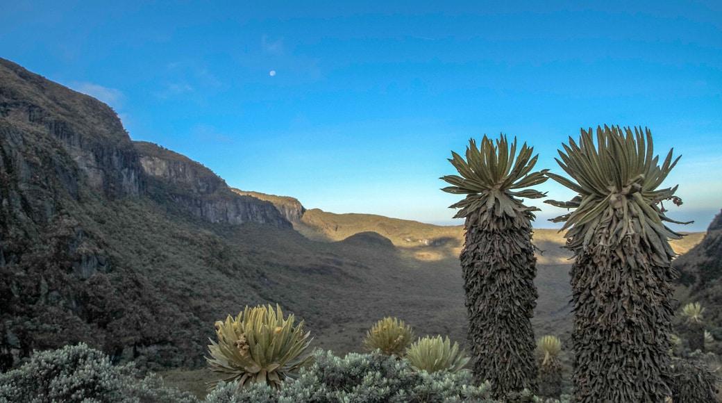 Los Nevados National Park showing desert views