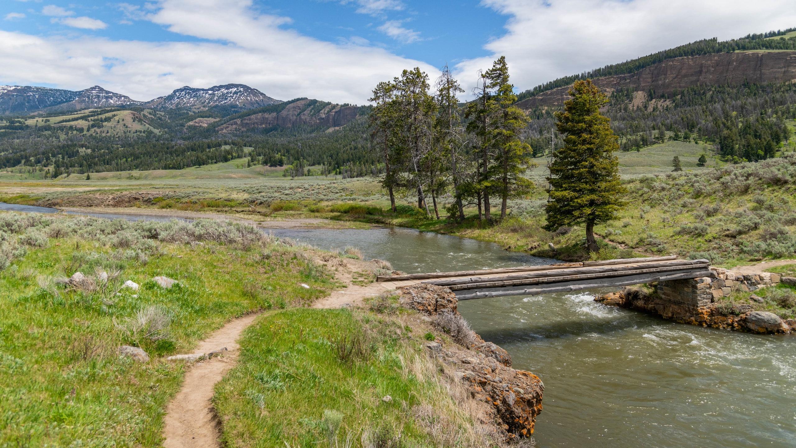 Staunen Sie über die vielfältige Pflanzenwelt von Lamar Valley, einer bezaubernden grünen Oase in Yellowstone Nationalpark. Entdecken Sie die Wasserfälle und die Thermalquellen der Gegend.