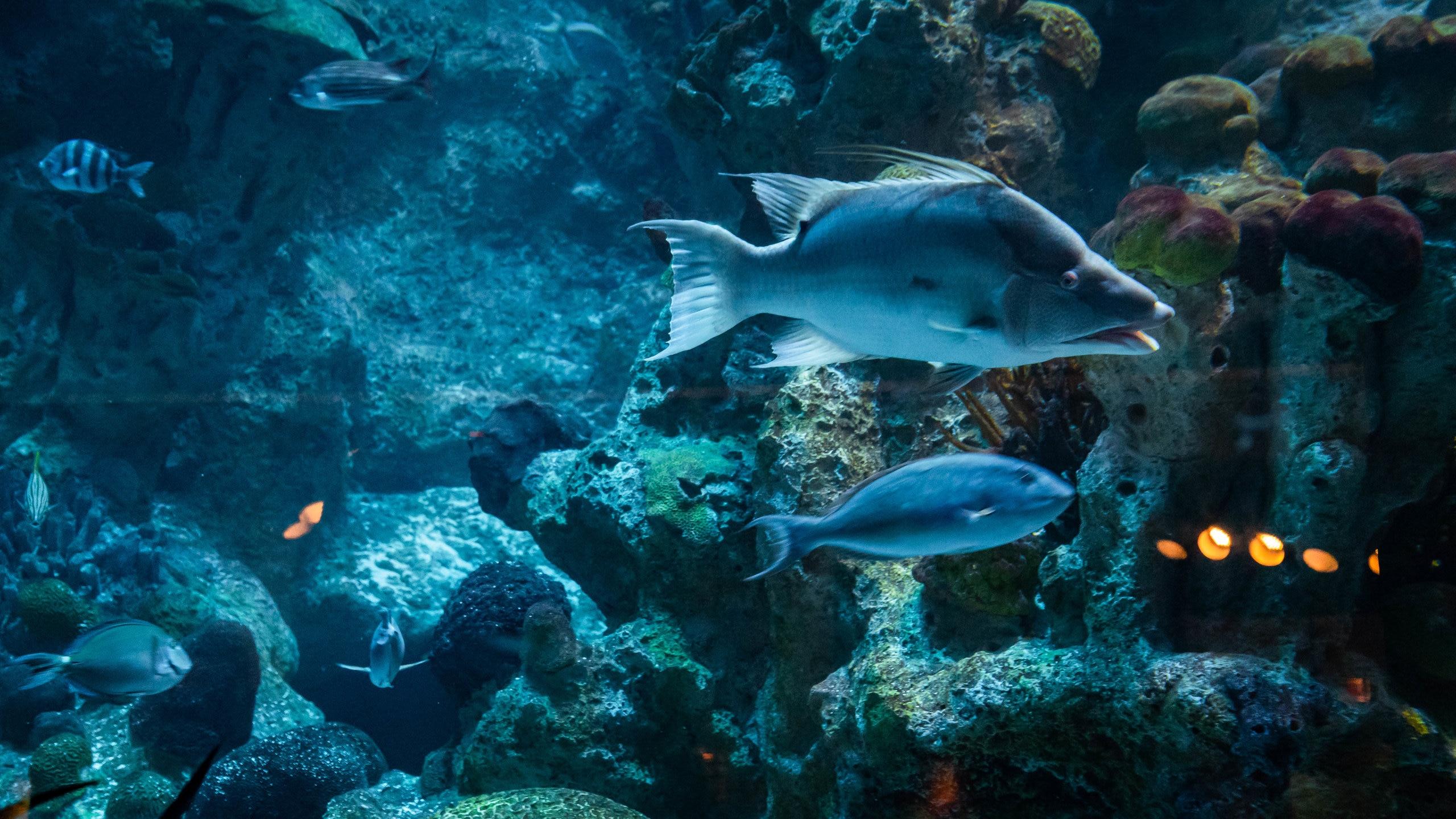 De leões marinhos a tubarões, este aquário moderno na orla de Boston traz o mundo oceânico para a palma das suas mãos.