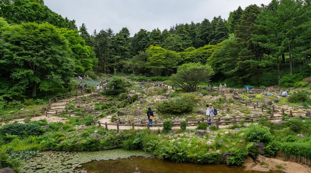 Rokko Alpine Garden showing a garden and a pond