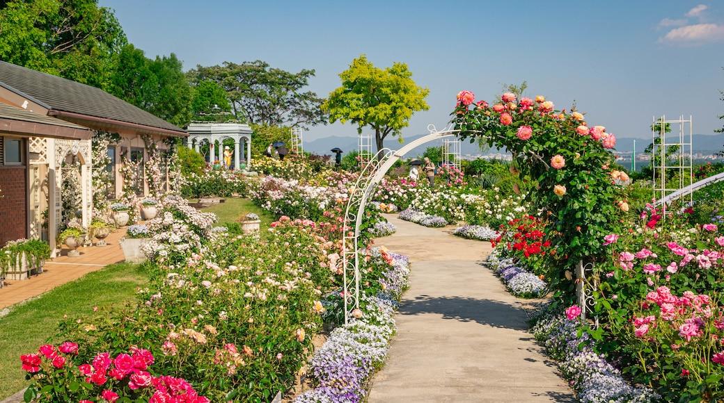 Biwako Otsukan featuring a garden and flowers