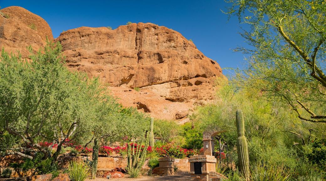 Camelback Mountain featuring desert views