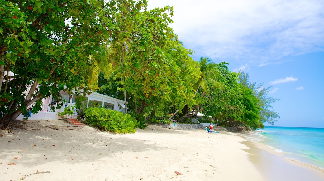 Mullins Beach showing tropical scenes and a sandy beach