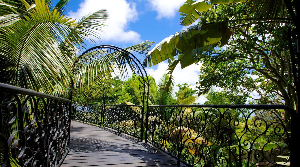Barbados Wildlife Reserve featuring zoo animals and tropical scenes
