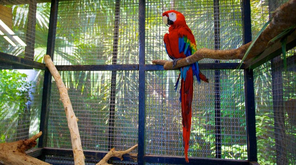 Barbados Wildlife Reserve showing interior views, zoo animals and bird life