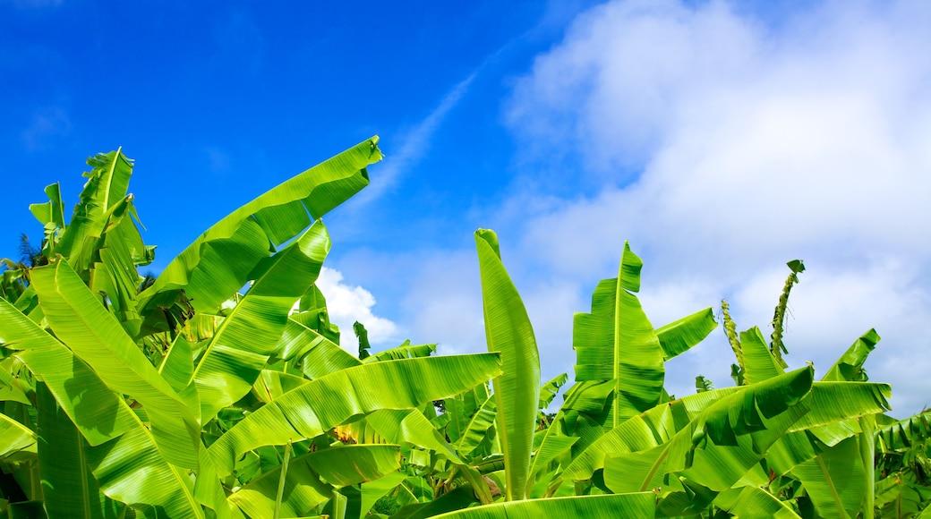 Barbados Wildlife Reserve which includes tropical scenes