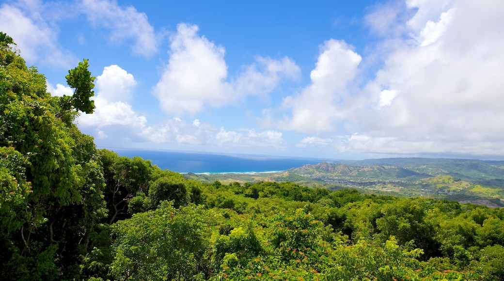 Barbados Wildlife Reserve which includes landscape views and forests