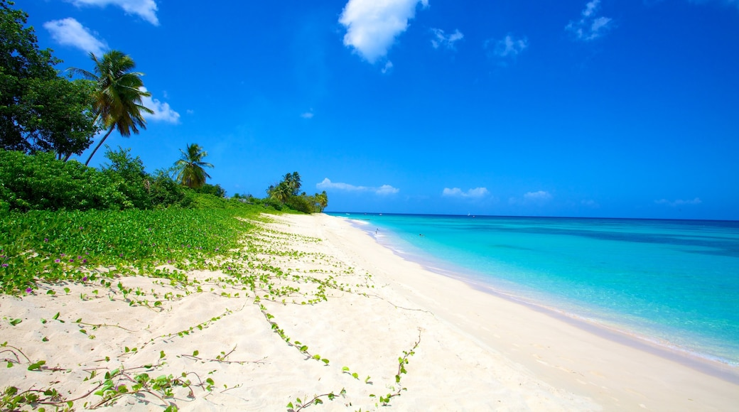 Paradise Beach featuring tropical scenes, a sandy beach and landscape views
