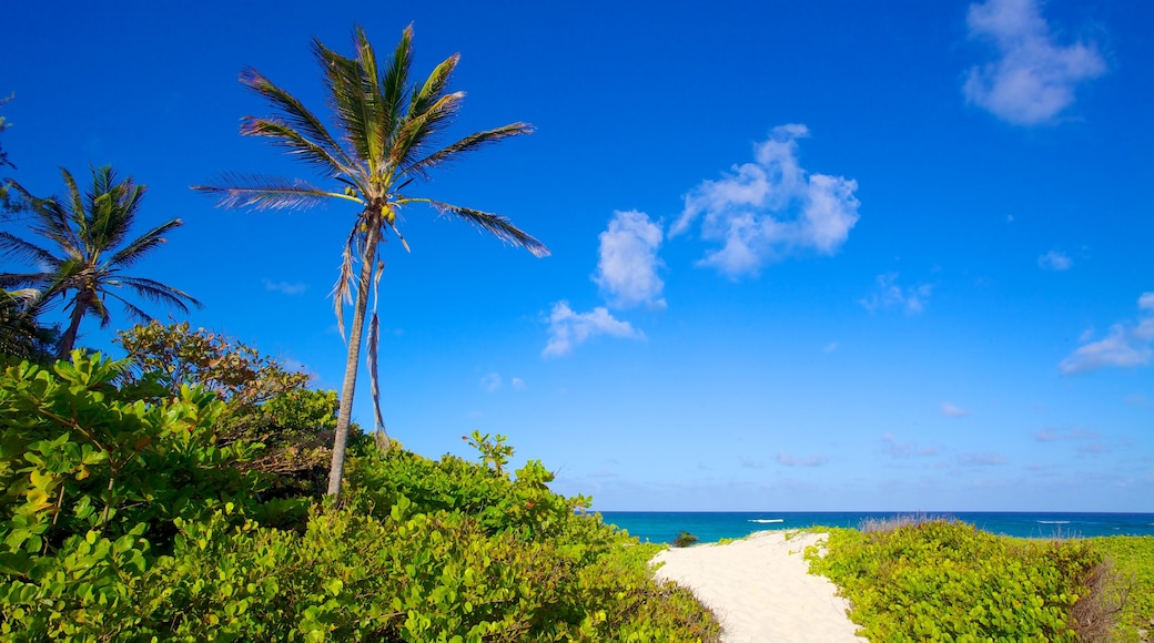 Silver Sands Beach welches beinhaltet Sandstrand und tropische Szenerien