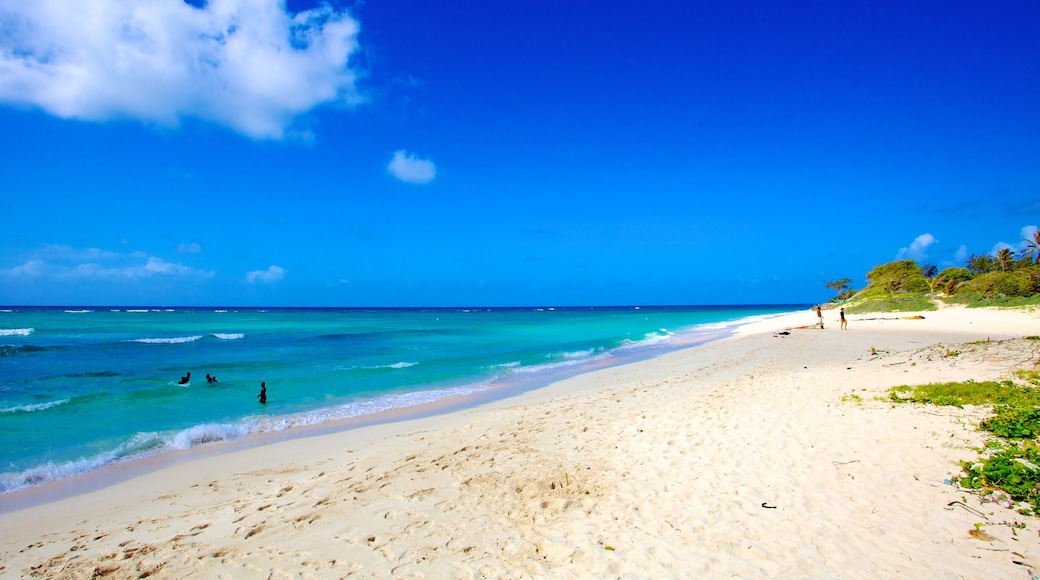 Barbados featuring tropical scenes, swimming and a sandy beach