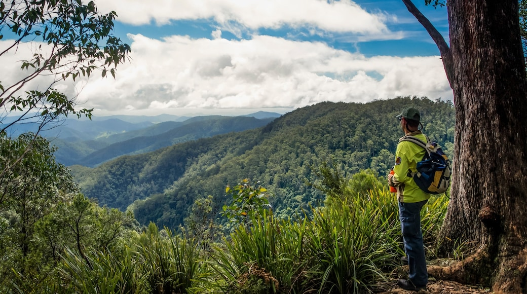 Barrington Tops National Park which includes mountains, tranquil scenes and hiking or walking