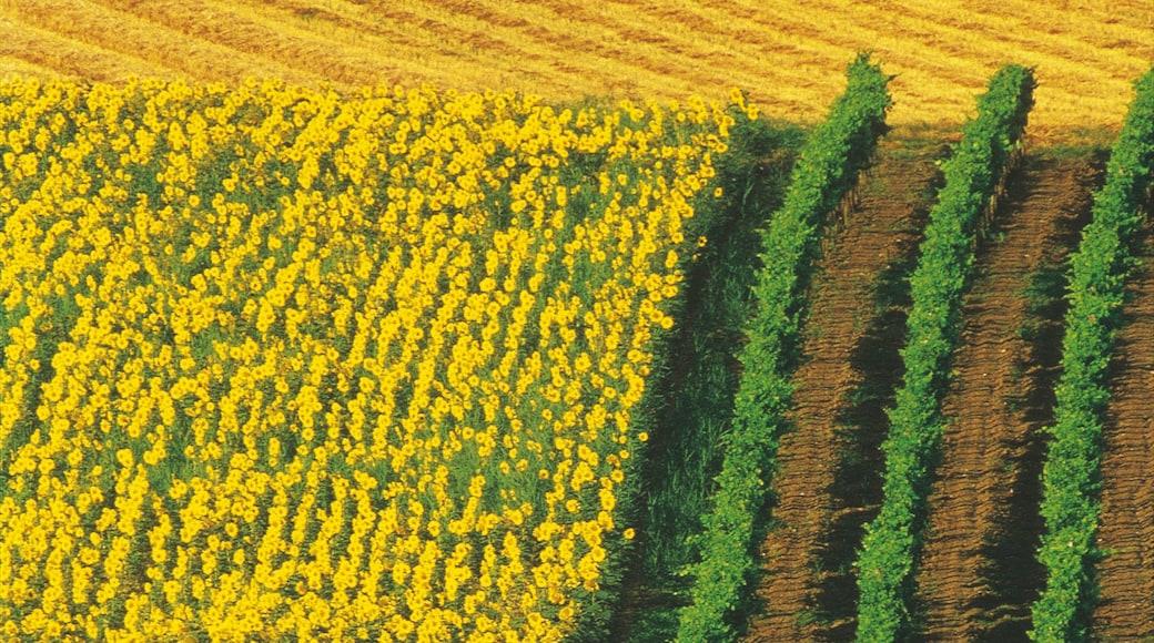 Eisenstadt caracterizando fazenda e flores