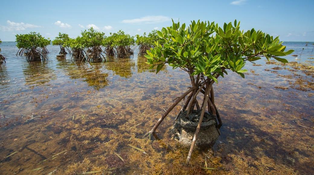 Kaimaninseln das einen allgemeine Küstenansicht und Mangroven