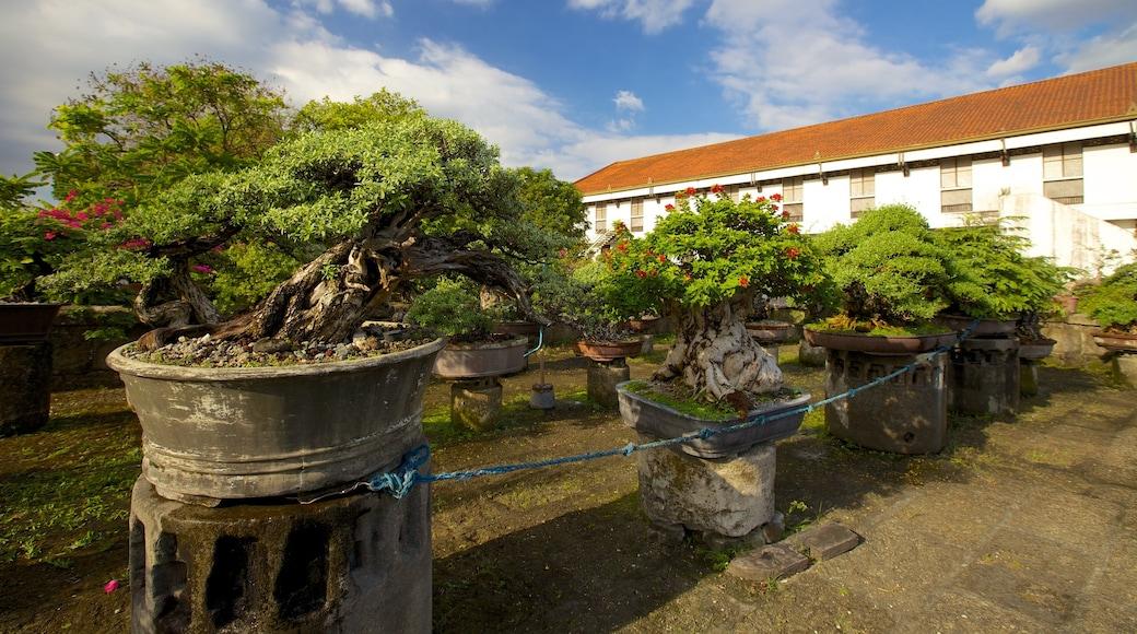 Baluarte de San Diego showing heritage elements and a garden