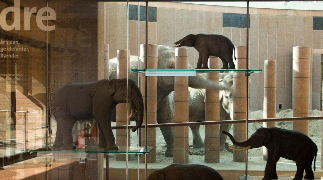 Zoo de Copenhague montrant animaux terrestres, animaux de zoo et vues intérieures