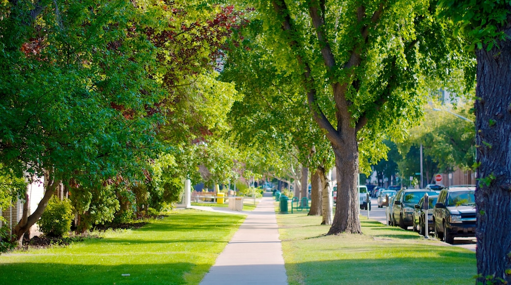 Saskatoon which includes a city, a small town or village and street scenes