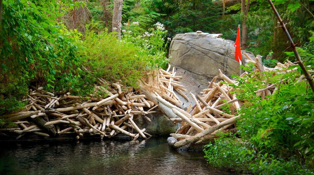Montréal Biodôme mit einem Waldmotive und Fluss oder Bach