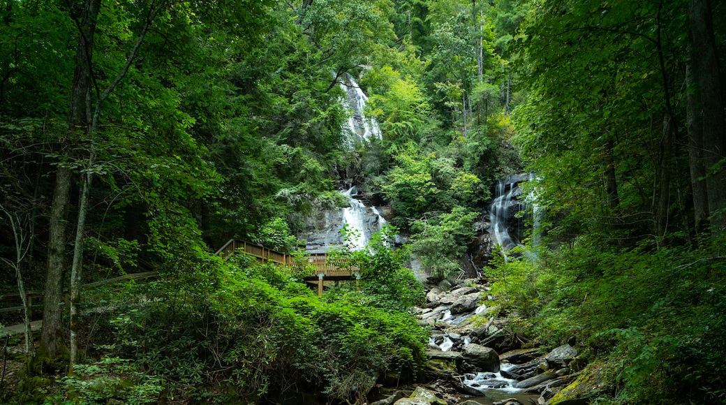 Anna Ruby Falls featuring a cascade, a river or creek and forest scenes