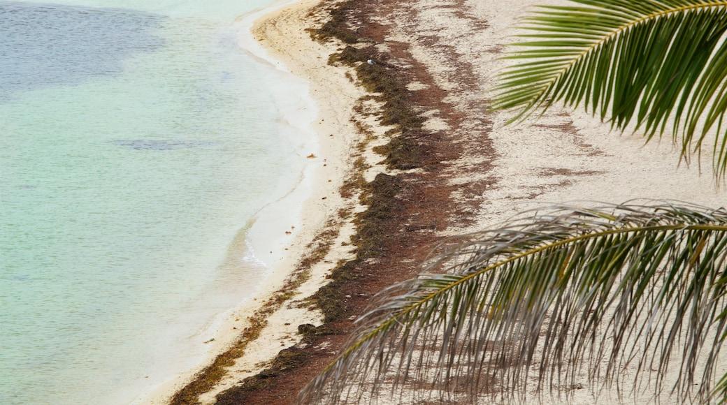 Bahia Honda State Park and Beach showing a sandy beach and general coastal views