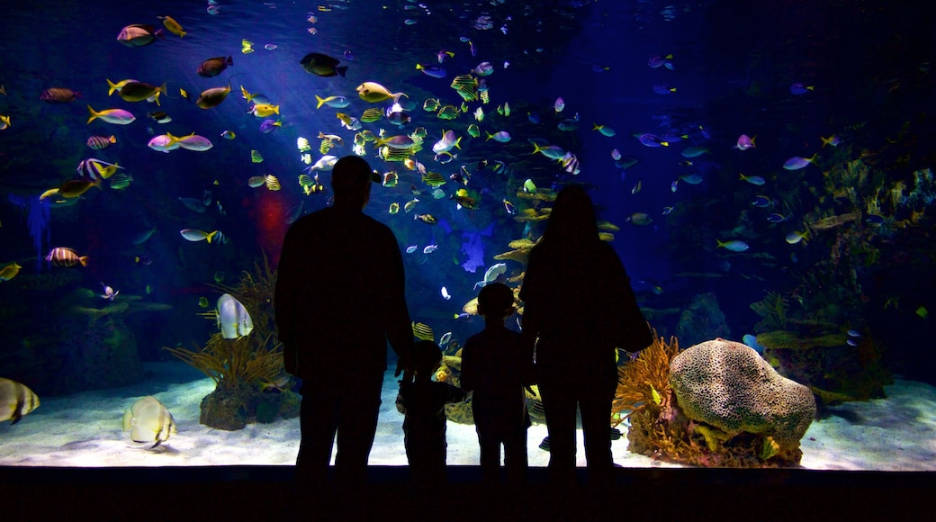 Ripley\'s Aquarium of the Smokies which includes interior views and marine life as well as a family