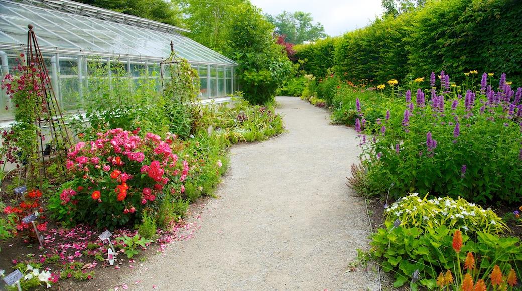 Toronto Botanical Garden featuring flowers and a garden