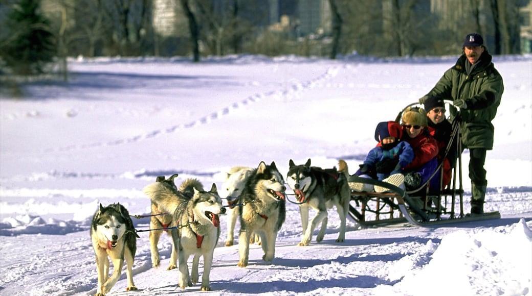 Parc Jean-Drapeau das einen niedliche oder freundliche Tiere, Schnee und Schlittenhundefahrten