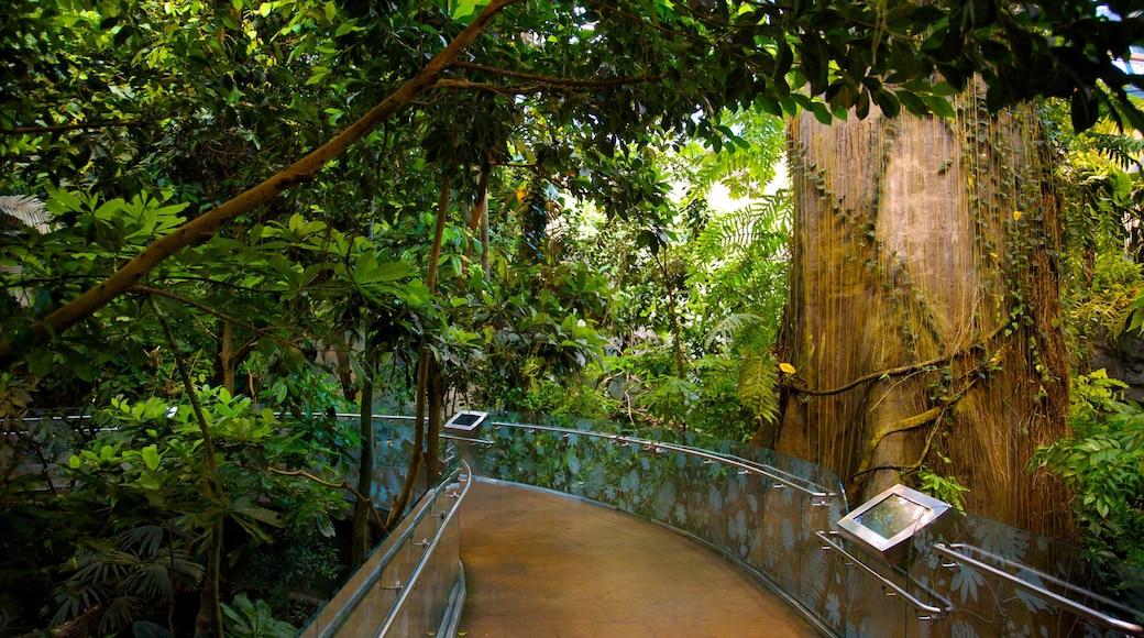 Montréal Biodôme welches beinhaltet Waldmotive und Garten