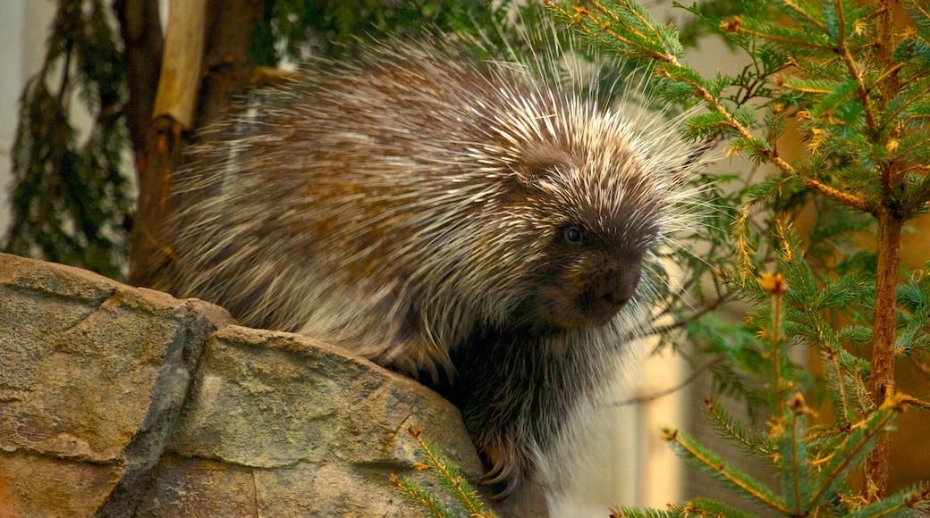 Montréal Biodôme das einen Zootiere und Tiere