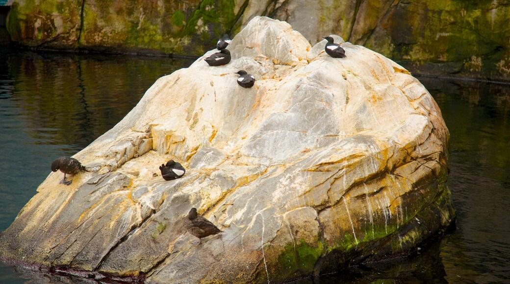 Montréal Biodôme welches beinhaltet Vögel