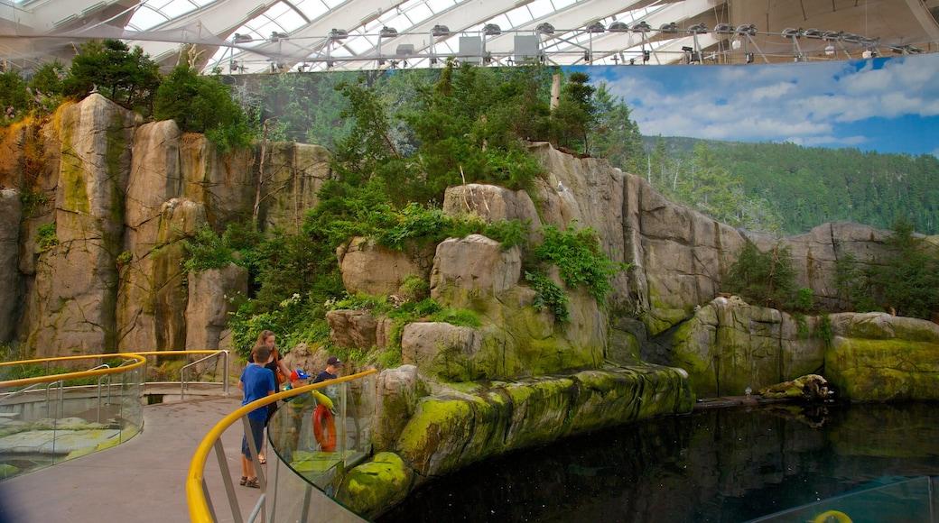 Montréal Biodôme welches beinhaltet Zootiere, Teich und Meeresbewohner