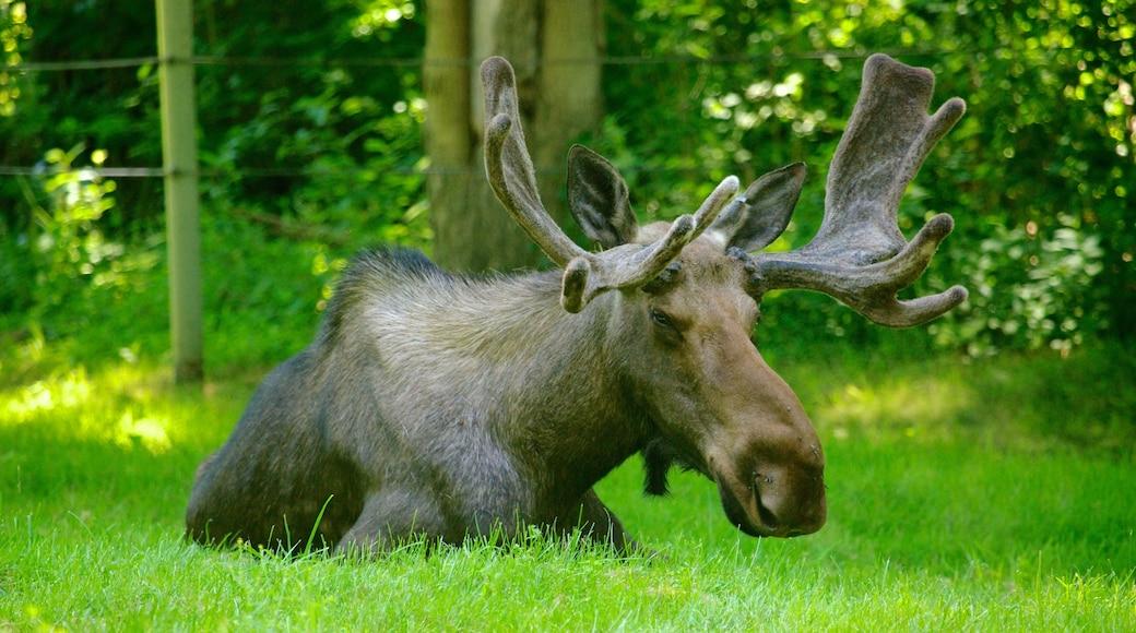 Toronto Zoo showing land animals and zoo animals