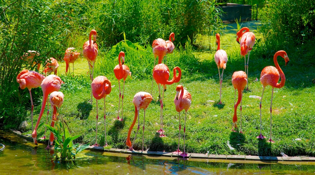 Toronto Zoo showing bird life, zoo animals and a pond