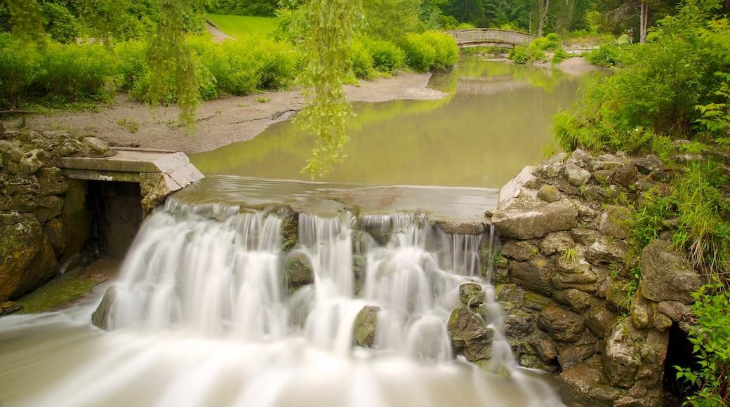 Edward Gardens featuring a park, a river or creek and a cascade