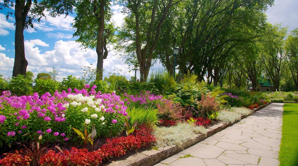 Battlefields Park showing flowers and a park
