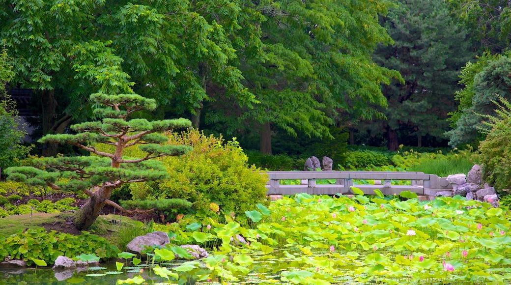 Montreal Botanical Garden das einen Garten, Fluss oder Bach und Brücke