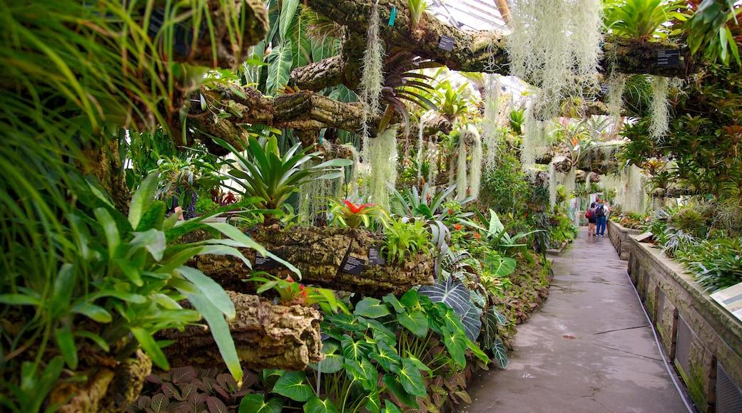 Montreal Botanical Garden das einen Innenansichten und Park
