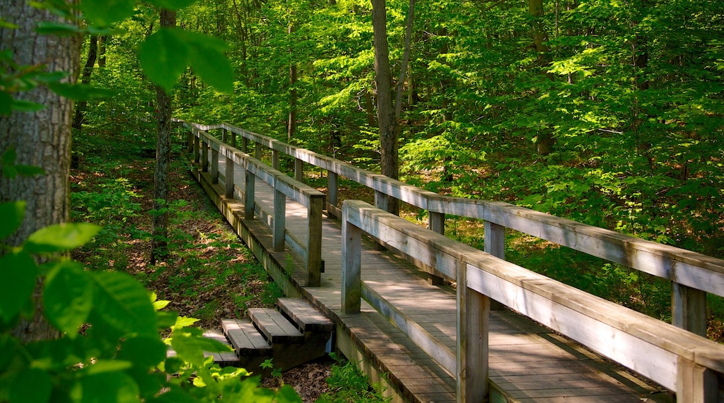 Gatineau Park showing a park and forest scenes