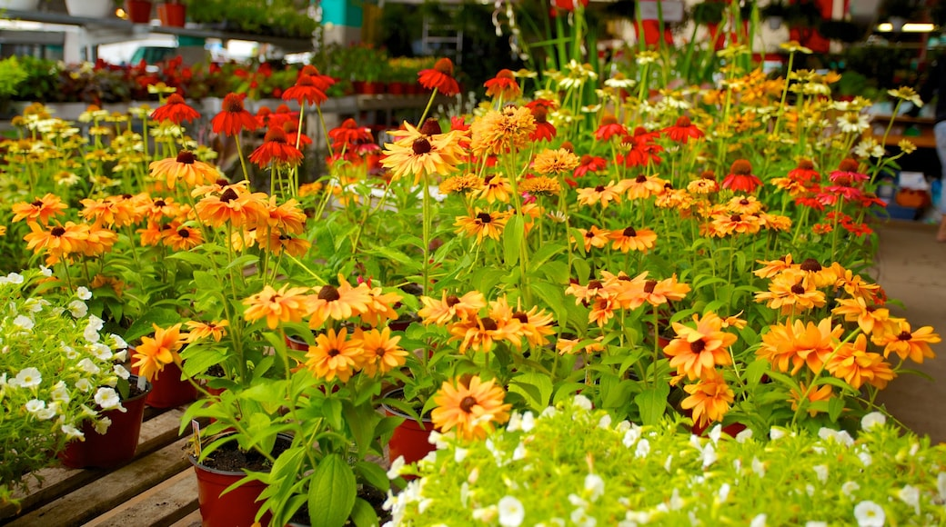 Jean-Talon Market che include fiori e mercati