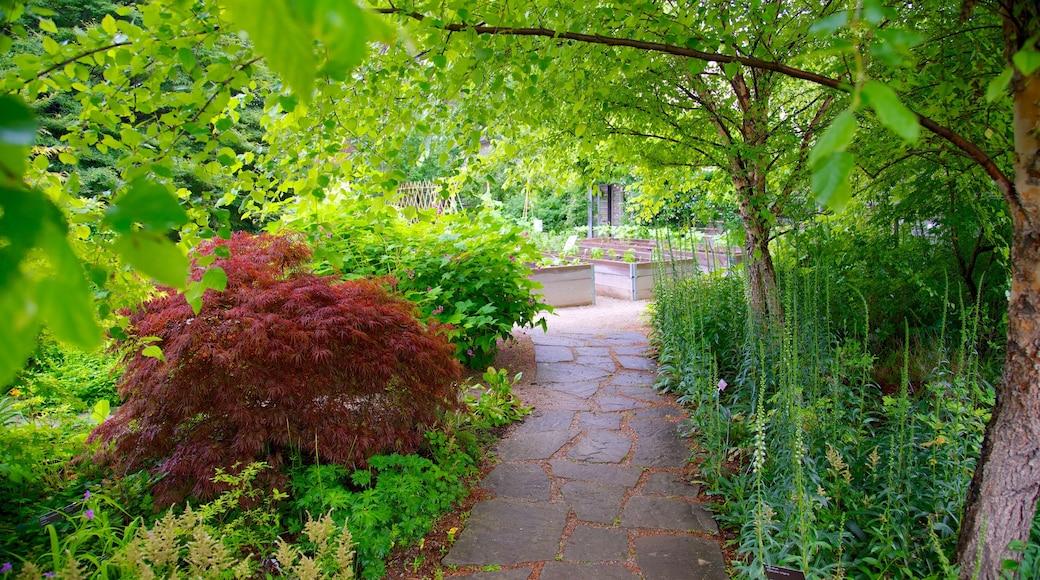 Toronto Botanical Garden featuring a garden