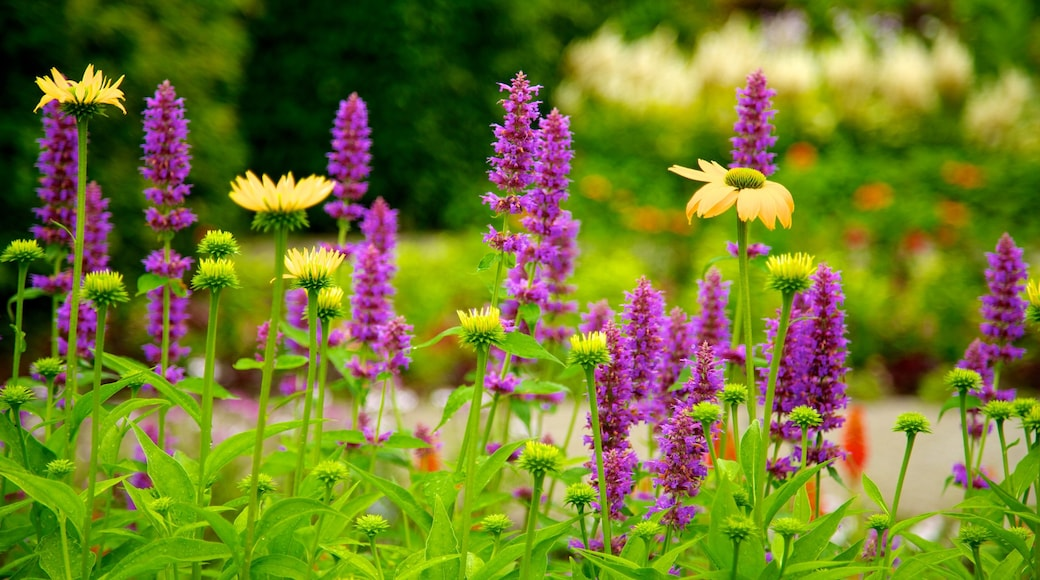 Toronto Botanical Garden showing a garden and flowers