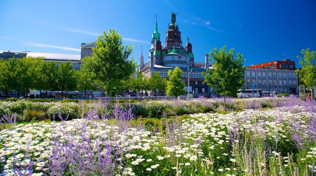 Vieux-Montréal das einen Blumen, Kirche oder Kathedrale und Stadt